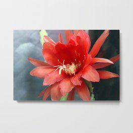 Jungle Cactus Red Metal Print