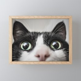 Funny Cat Framed Mini Art Print