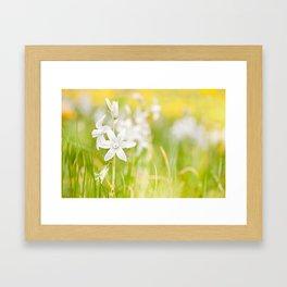 White Ornithogalum nutans pretty bloom Framed Art Print