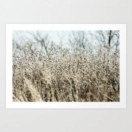 Aqua Wild meadow grass in winter Art Print