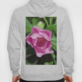 Musk Mallow - Pretty Pink Flower Hoody