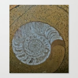 Ammonite in fossilized river bed Canvas Print