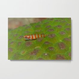 The little fish on the green hills Metal Print