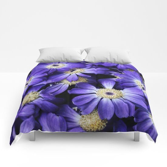 Asters Comforters