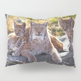 Graceful Wonderful Female Lynx Mother With Two Super Cute Kitten Close Up Ultra HD Pillow Sham