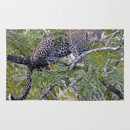 Leopard in a tree, Africa wildlife Rug