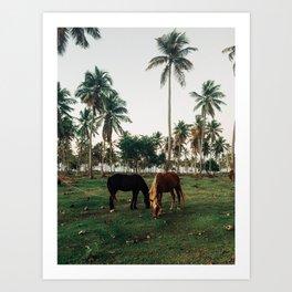 Horses in Samana, Dominican Republic Art Print