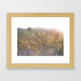 Creosote Stars  Framed Art Print