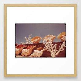 Souvenir Seashells Framed Art Print