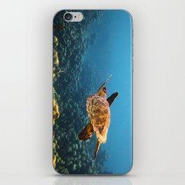 Caribbean Turtle iPhone Skin