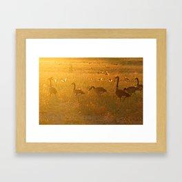 GOLDEN MOMENT Framed Art Print