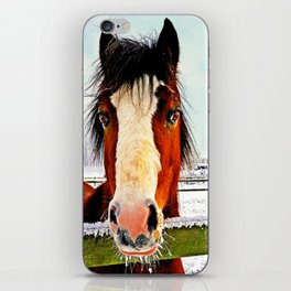 Snowy Whiskers iPhone Skin