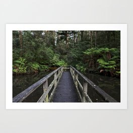 Bridge into Forest Beauty Art Print