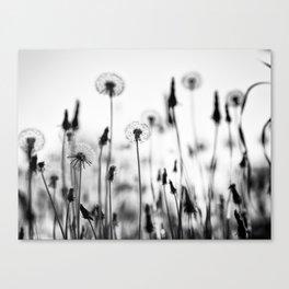 Blowballs VS Clocks Canvas Print