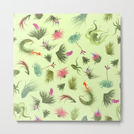 Air plants off white background Metal Print