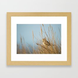 Morning Bird Call Framed Art Print