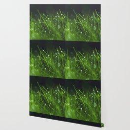 grass and bokeh Wallpaper