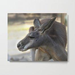Male Kangaroo Metal Print