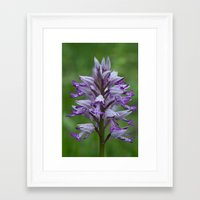 military Framed Art Prints featuring military orchid by Jo Beerens