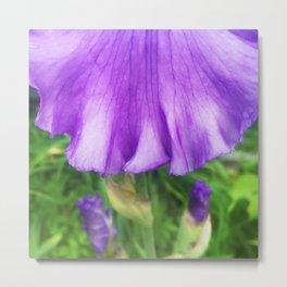 499 - Purple Iris Abstract Metal Print
