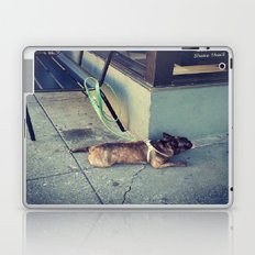 Dog Days Of Summer Laptop & iPad Skin