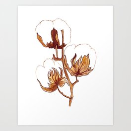 Cotton Watercolor Painting Art Print