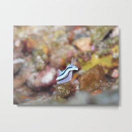 Nudibranch Posing Like a Bunny Metal Print