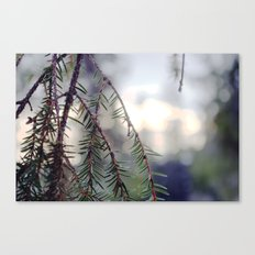 sunset in the woods. Canvas Print