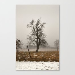 Tree Stands Tall Canvas Print