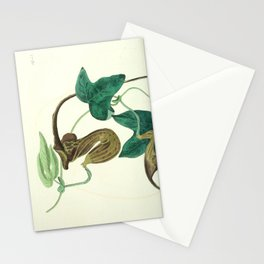 Flower 1453 aristolochia caudata Livid flowered Birthwort16 Stationery Cards