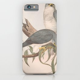 New Holland Goshawk, astur novae-hollandiae3 iPhone Case