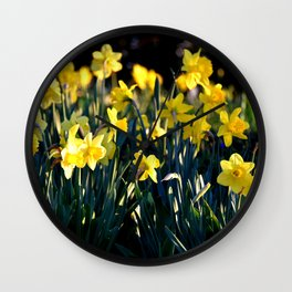 LOVELY DAFFODILS IN THE LATE SPRING AFTERNOON LIGHT Wall Clock