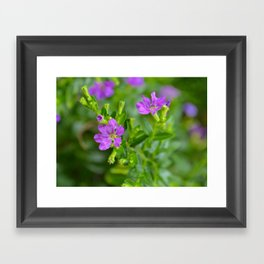 Climbing  Framed Art Print