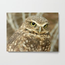 Owl Eyes, They're Watching You Metal Print