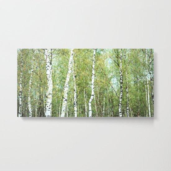 the birch forest III Metal Print