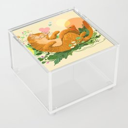 Sleeping cat Acrylic Box