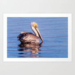 Brown Pelican - Study 7 Art Print