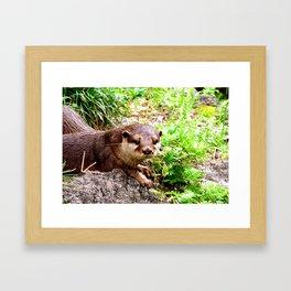 Otter Love Me Framed Art Print