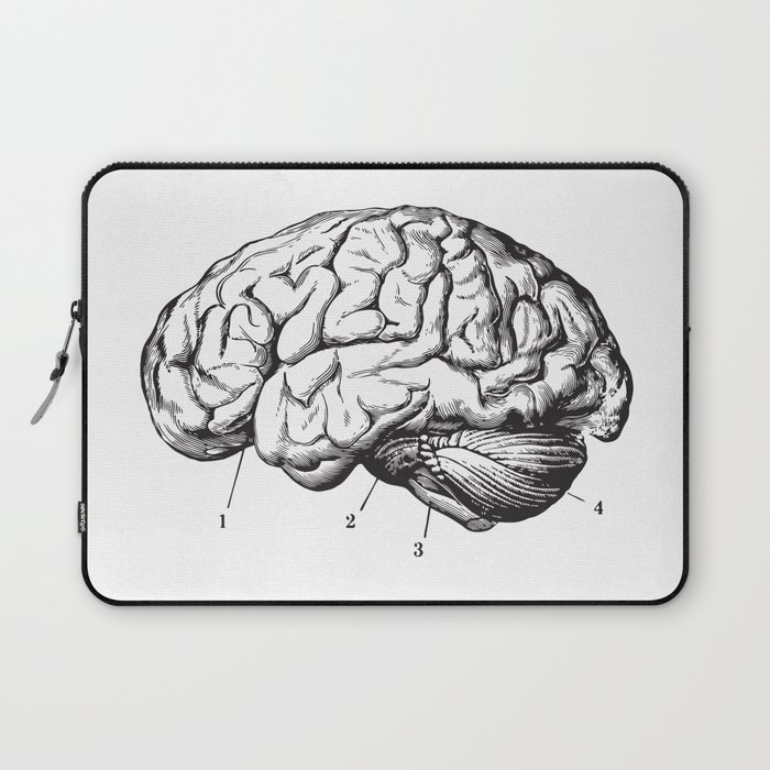 Human brain sideview anatomy detailed illustration laptop sleeve by human brain sideview anatomy detailed illustration laptop sleeve ccuart Gallery