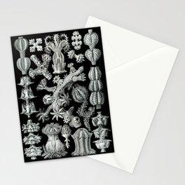 Ernst Haeckel - Gorgonida Stationery Cards