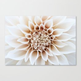 Cafe Au Lait Dahlia Canvas Print