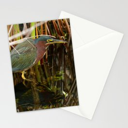 Beautiful Green Heron Stationery Cards