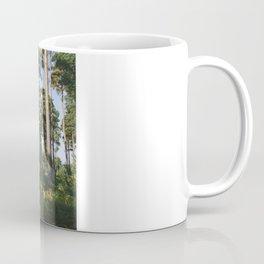Sunlight through forest of Pine trees (Pinus sylvestris). Thetford, Norfolk, UK. Coffee Mug
