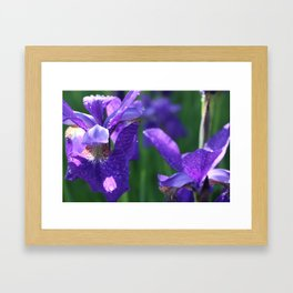 Iris morning Framed Art Print
