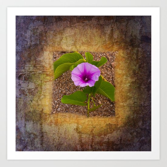 Morning glory on sand Art Print