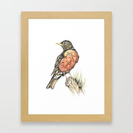 Robbin Framed Art Print