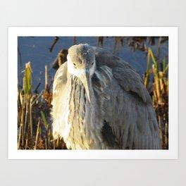 Heron on the ice Art Print