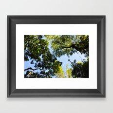 Canopy I Framed Art Print