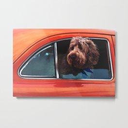 Dog in a coral car Metal Print