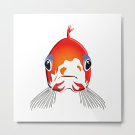 Koi carp Nishikigoi Tancho fish breeding Metal Print